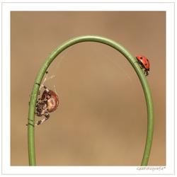 Lovely Spider *