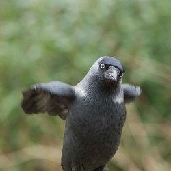 Ik doe een pinguïn na (Vogels in de tuin)