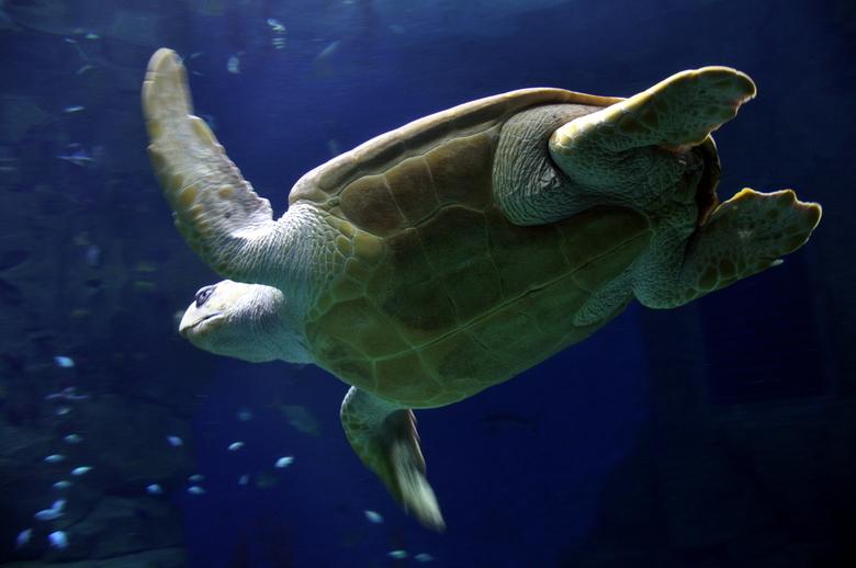 Schildpad - Schildpad @ Blue Reef Aquarium Portsmouth