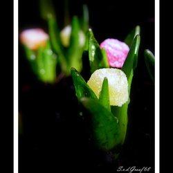 Voorjaar....;)