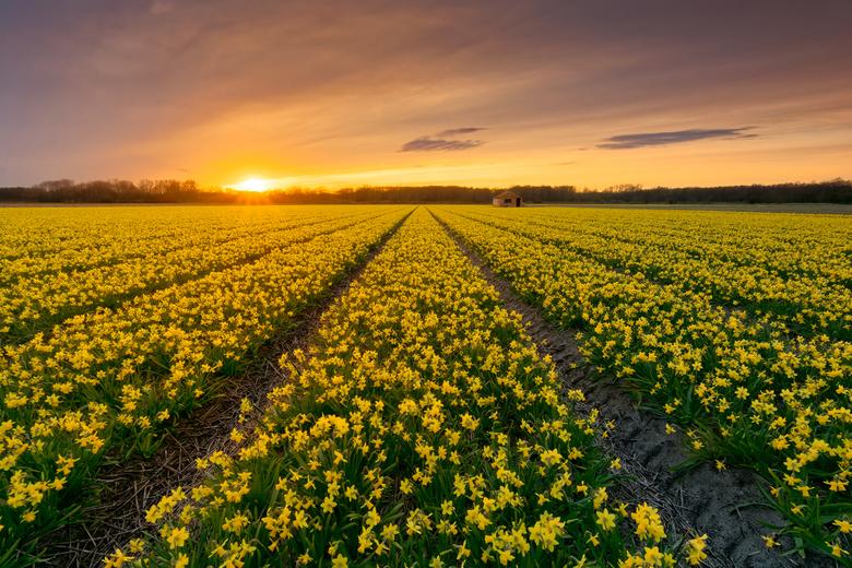 Some flowery sunset - &quot;some Flowery Sunset&quot;<br /> <br /> De tijd is weer daar! Het word weer genieten!<br /> Groetjes Ferry