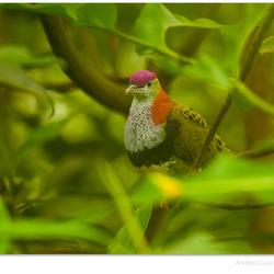 Mangrove Green