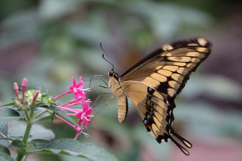 Bewogen vlinder  - Wat bewogen aan de vleugels want de vlinder was erg bewegelijk.