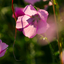 Paarse wilde bloem