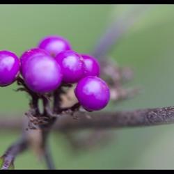 fleurige besjes