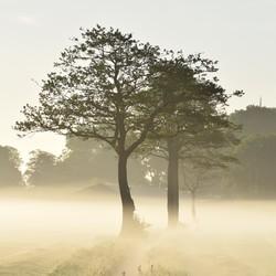 Mistige zonsopkomst in Rouveen
