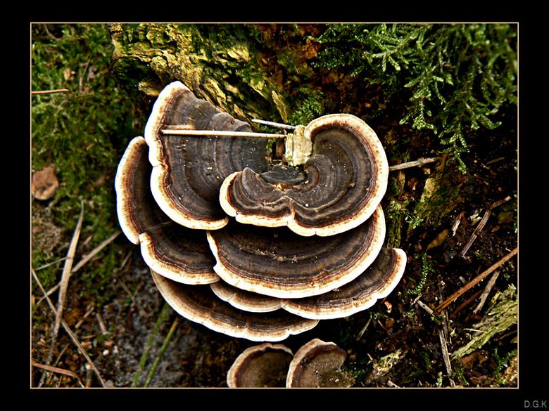 Autumn Flavour 6 - Het beroemde elfenbankje. Niet bepaald mooie kleuren zoals andere paddestoelen, maar dat maakt m niet minder mooi naar mijn idee.<b
