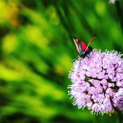 De bloem en de vlinder