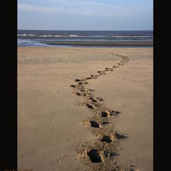 Strand.. voetsporen van een paard