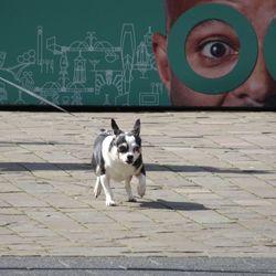 Hondje in Rotterdam Centrum