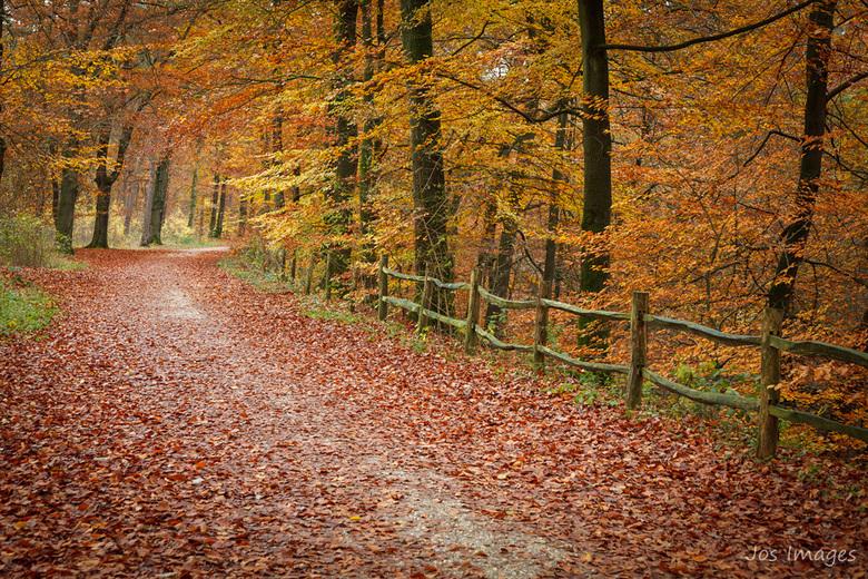 Kleurtjes - Weer een foto uit mijn camera van flink wat herfstkleuren. Ga er lekker op uit komend weekend en geniet ook van deze kleuren.<br /> Fijn