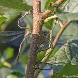 Libellenfeest