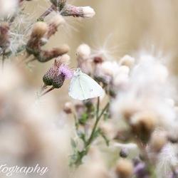 Natures dream..