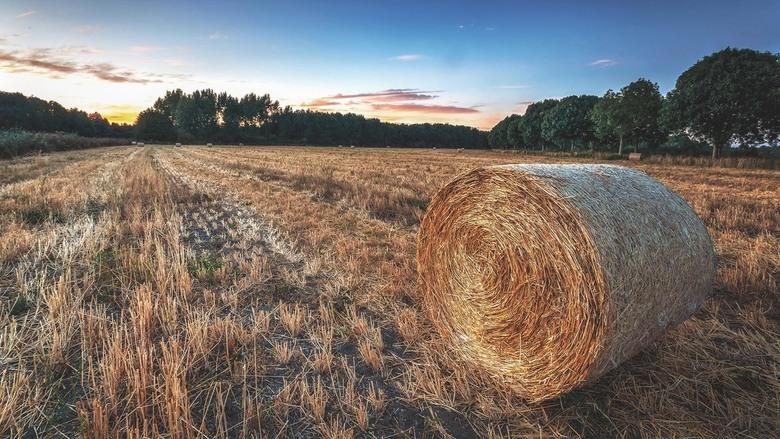 Rollin' - Opgerold graan tijdens het blauwe uurtje.