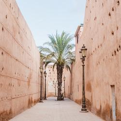 Palmboom in de medina