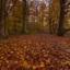 Herfst......