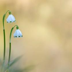 lente klokjes