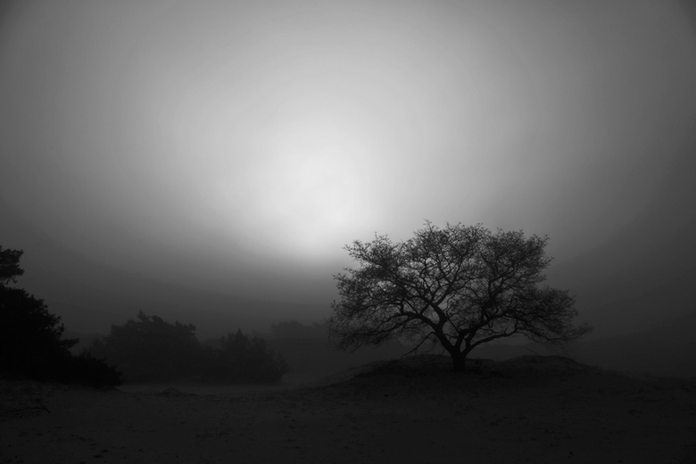Out of the fog... - ...