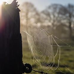 Zonneweb
