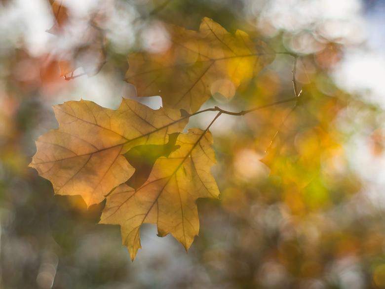 double autumn delight