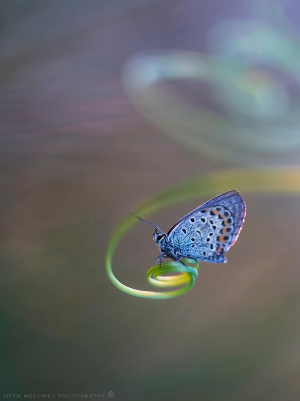 Spinning bleu - Deze opname heb ik vrijdagochtend gemaakt met de zon net opkomend aan de horizon. Het was toen al zo'n graad of 19 dus veel tijd