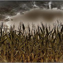 openbaring aan een maisveld :D