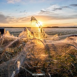 Enorme spinnenwebben op Texel.