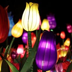 Tulpen China Light Rotterdam