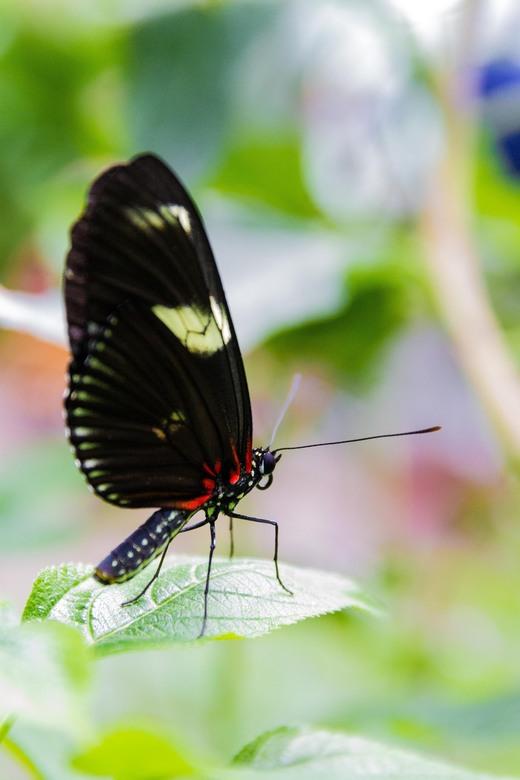 Vlinder.jpg - Vlinder.jpg
