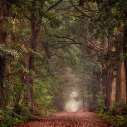 Autumn's Arrival.