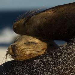 Moeder en kind zeeleeuw