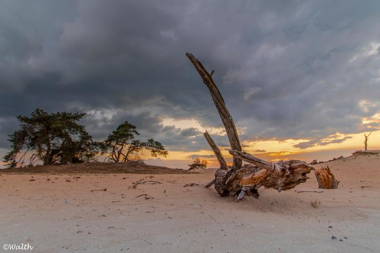"""Wekeromse Zand - """"Gewoon Nederland"""" op de veluwe. Het wekeromse zand een klein stuifzandgebied in de Gemeente Ede"""
