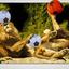 zelfs de leeuwen .................