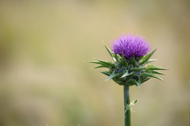 Prachtig paars -