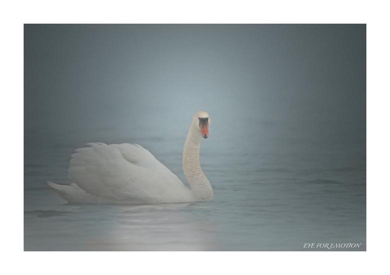Zwaan in de mist... - Deze heb ik gistermorgen genomen...was echt dichte mist..en zag er zo sprookjesachtig uit, die witte zwaan daar in de mist op he