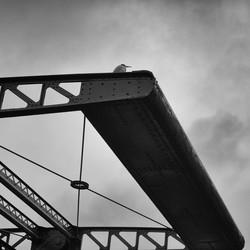 Reiger op brug - Willemsstraat Amsterdam