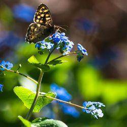 Zon voor de vlinder