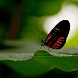 Vlinder in het licht.