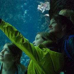 Aquarium straatfotografie