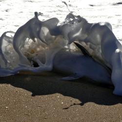 dolfijn figuara d foz 07-11-15
