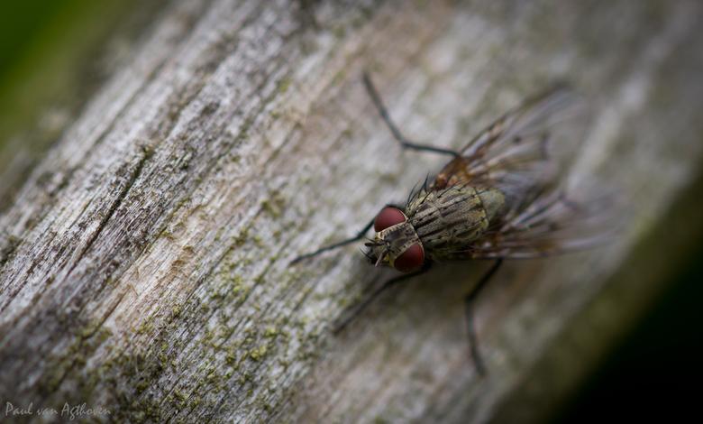 Red Eyes - IMG_1335.jpg