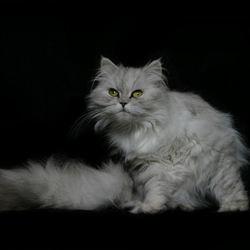 Lizzy portret