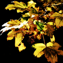 Autumn in the  dark