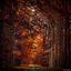 Magic forest Lochem