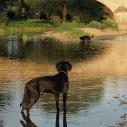 Hond op de uitkijk