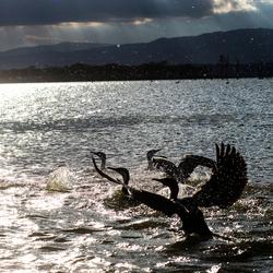 Lake Amboselli, Kenia