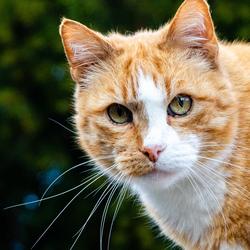 kat van de buren