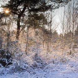 Gouden Sneeuw