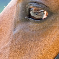 Hors eye