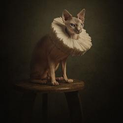 Portret van een Sphynx
